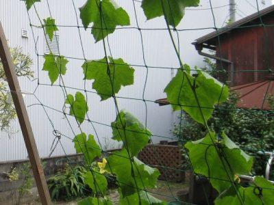 島根松江ルラクホーム緑のカーテン